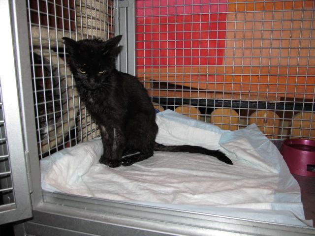 Mokré černé kočička com
