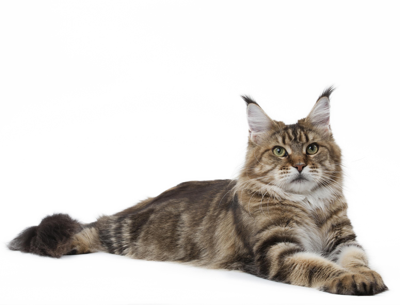 Casting dospívající kočička