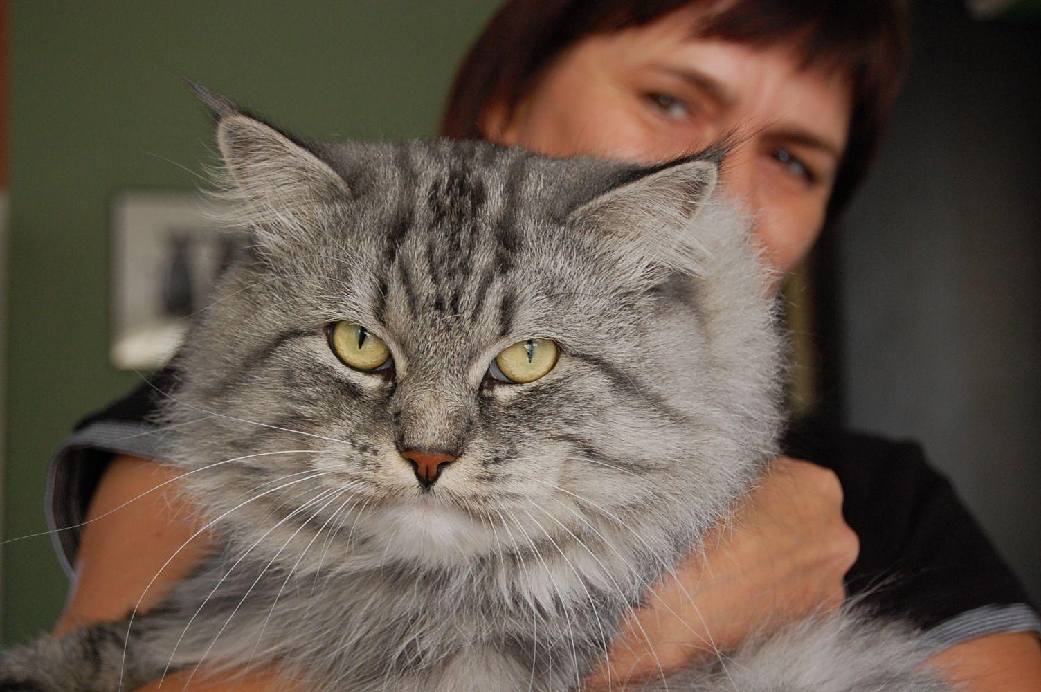 obrázky velkých koček
