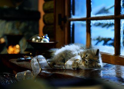 Všechny kočička fotky