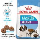 Royal Canin GIANT STARTER - granule pro březí nebo kojící feny a štěňata