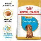 Royal Canin Dachshund Puppy - granule pro štěně jezevčíka