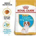 ROYAL CANIN Cavalier King Charles Puppy - granule pro štěně kavalír king charles španěl