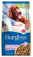 BURGESS   dog  MATURE