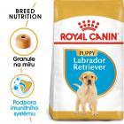 Royal Canin Labrador Puppy - granule pro štěně labradora