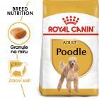 Royal Canin Poodle Adult - granule pro dospělého pudla