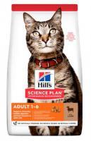 Hills cat  ADULT/lamb