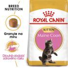 Royal Canin cat KITTEN MAIN COON -  granule pro mainská mývalí koťata