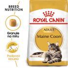 Royal Canin Maine Coon Adult - granule pro mainské mývalí kočky