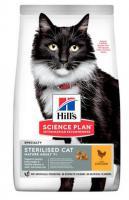 Hills cat   MATURE/sterilised