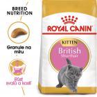 RC cat KITTEN BRITISH shorthair - granule pro britská krátkosrstá koťata