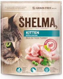 SHELMA cat  KITTEN turkey