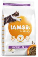 IAMS cat KITTEN  chicken