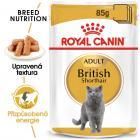 Royal Canin British Shorthair Gravy - kapsička pro britské krátkosrsté kočky ve šťávě
