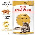Royal Canin Maine Coon Loaf kapsička s paštikou pro mainské mývalí kočky