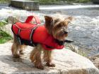 Plovací záchranná vesta pro psa