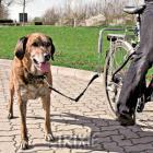 Trixie dog vodící set na kolo